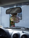 Dashboard Shrine